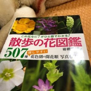 この花は。