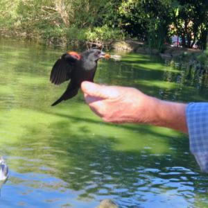 人口湖「ストウレイク」の水鳥たち♪