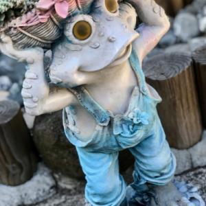 装いも新たな「カエルさんと寄せ植え」