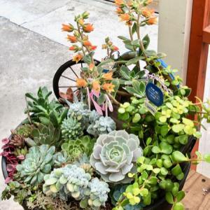 多肉寄せ鉢の花・12個のアップリケが可愛い壁掛け(娘作)