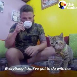 旅の最中に子猫を拾ったという動画