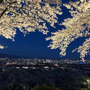 2019春_夜桜