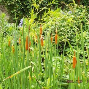復習コピペ・ターシャさん特集動画。昔の私の庭。