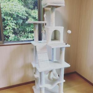 家事代行レポ【ペットのお部屋作り】