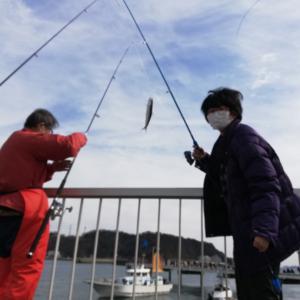 話題のいわし釣りに行きました‼️