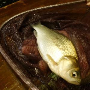 21.4/14  色んな魚が釣れますよ~