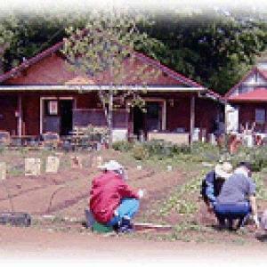 多摩丘陵で農業をやっていく中で、、