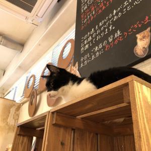 福岡の猫カフェ「Neko Cafe Keurig大名店」で十猫十色の猫たちに癒されてきました♪