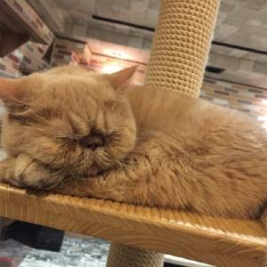 ねこはいつでもかわいい。お疲れならブサカワ猫でも見ていきなんし【最近のきなこまとめ】