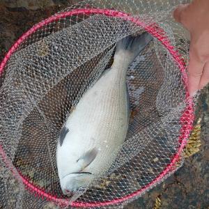 磯釣り 和歌山