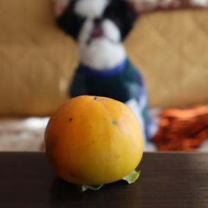 秋のお楽しみ~柿もぎ