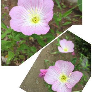 名前はわからないけどこのお花のイメージ♡野の花