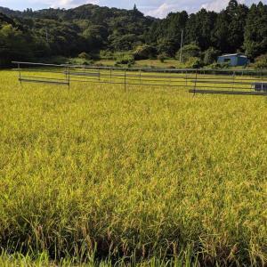 米作りのMatrix