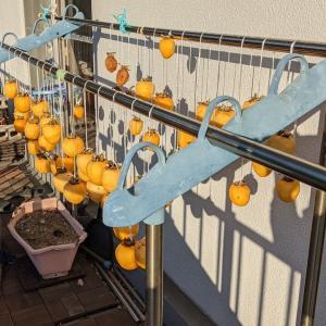 干し柿製作中