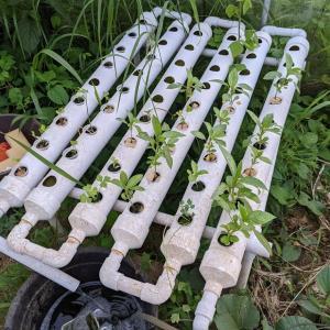 養液栽培の新方式(続き2回目)
