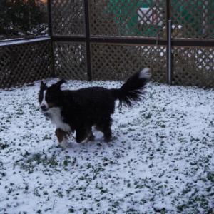 今度こそ根雪かな?