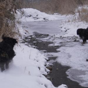 凍った川を渡りましょう