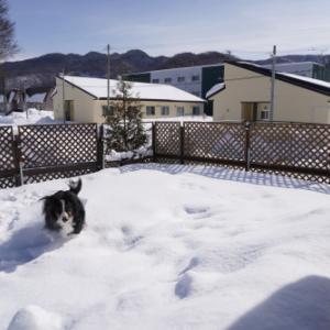 雪の量比較