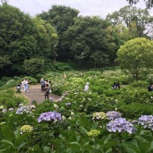 ぐんまの旅、前橋市荻窪公園、あじさい