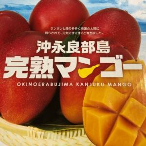 沖永良部完熟マンゴー 夏に食べたい甘いもの
