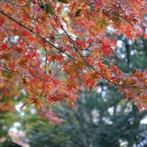 + 秋日和・・・ エルキュール・ポアロの『オリエント急行殺人事件』  『オブリビオン』に見るクローン人間の誤解  未来産業に後ろ向きな日本の自滅構造