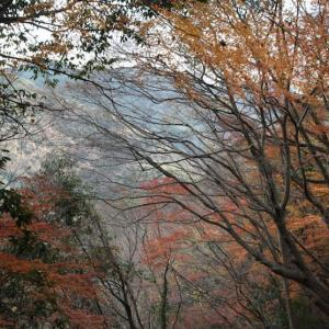 + 紅葉散りて年を越し・・・ 「武士道」の感慨  映画「コンドル」と武士道  武士道の困難は生きることにあり