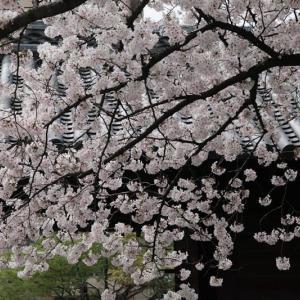 + 春風の洗濯もの・・・ 映画『コーチ・カーター』の問題提起  スポーツとは何か  HS政経塾という日本の希望