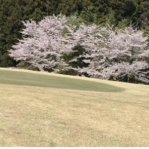 3/31 花見のゴルフ