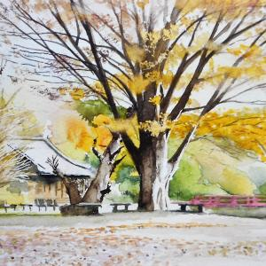 大樹が彩る風景 称名寺