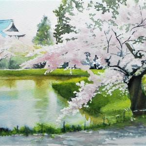 桜が彩る 称名寺阿字が池 その1