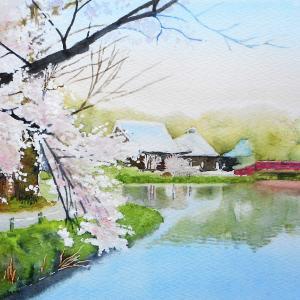桜が彩る 称名寺阿字が池 その3