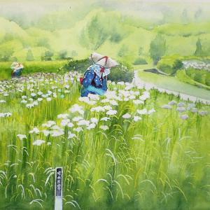 花菖蒲の咲くころ 菖蒲園の風景