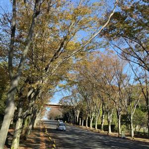 東海大学湘南キャンパス 紅葉散歩!