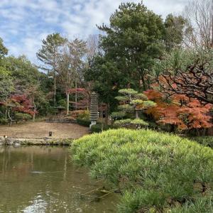 平塚総合公園 紅葉散歩 第2弾! その1