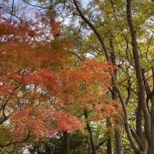 平塚総合公園 紅葉散歩 第2弾! その2