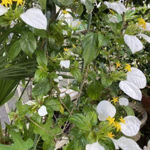 ささやかな庭いじり! 庭の花