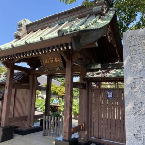 平塚 要法寺のハス!