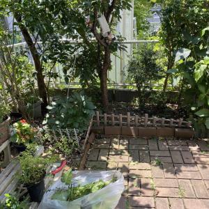 ささやかな庭いじり! 庭の整理