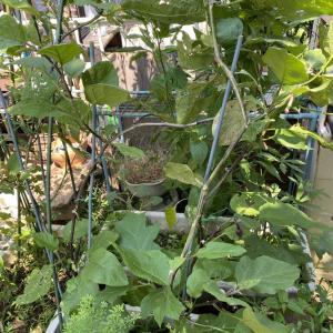 ささやかな庭いじり! 庭整理