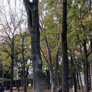 平塚総合公園の紅葉!