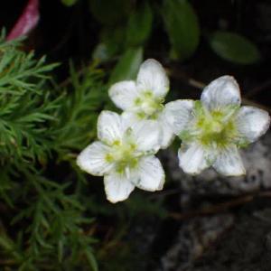 2021年9月4日(土)~5日(日) 木曽駒ケ岳で見た植物たち