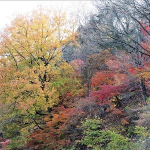妙義山の紅葉と展望