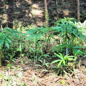 千葉県の飯高壇林跡 3