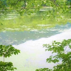 南会津の観音沼