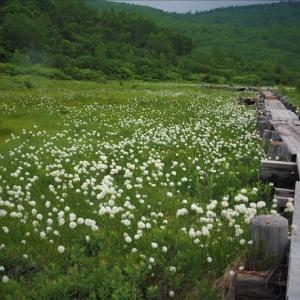 福島の浄土平は標高約1,600mの湿原です。