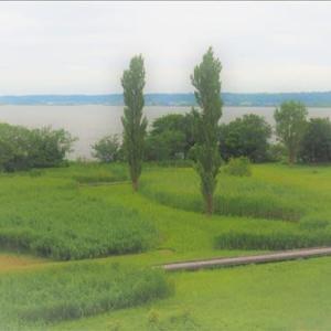 霞ケ浦の蓮園周辺の風景