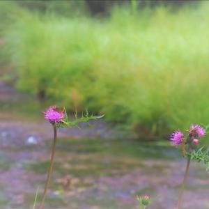 日光の小さな湿地・・・