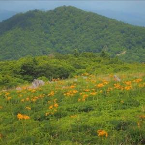 四国カルスト台地の花