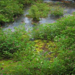 秋の姫川源流と居谷里湿原