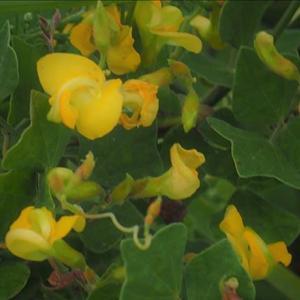 近隣散策・・・成東東金食虫植物群落界隈の植物、